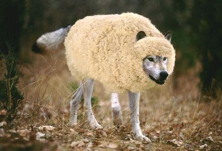 Wolfsheep1